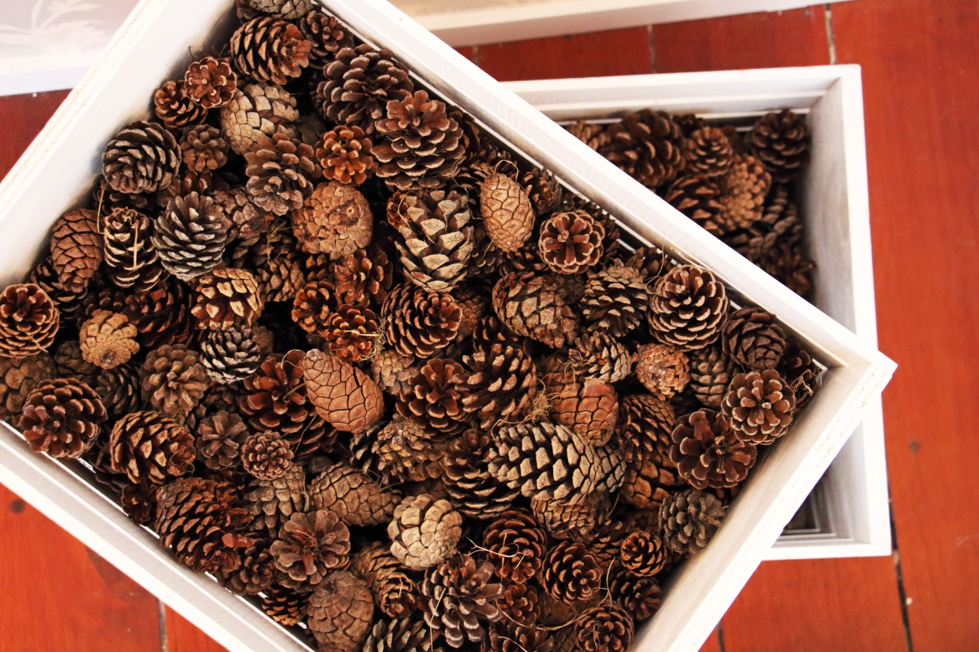 wreath-workshop-pine-cones