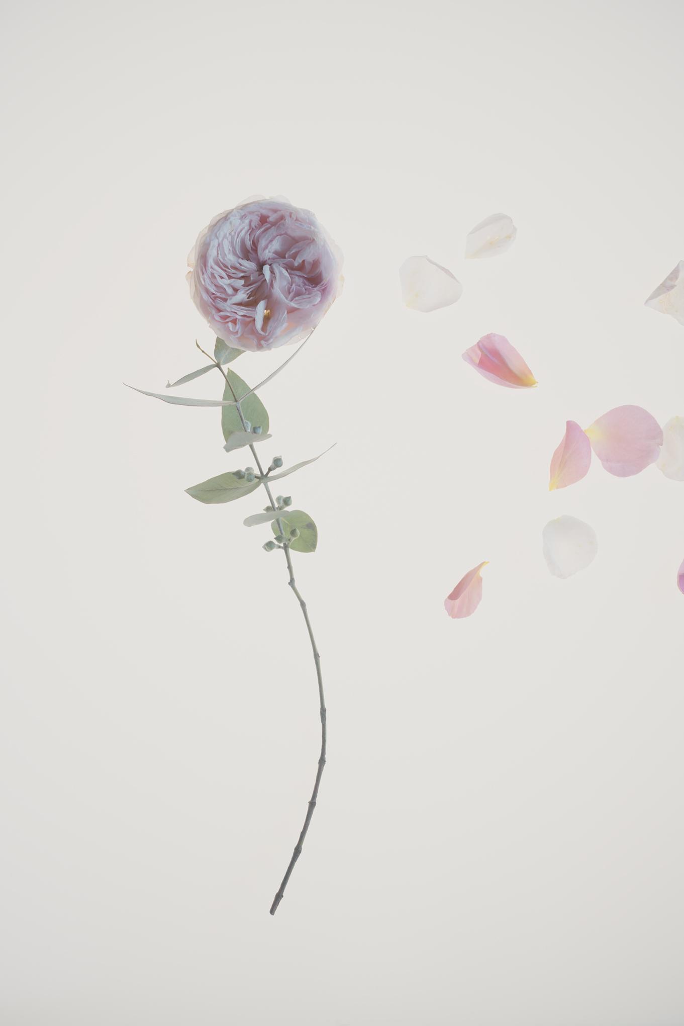 botanical foraging-060