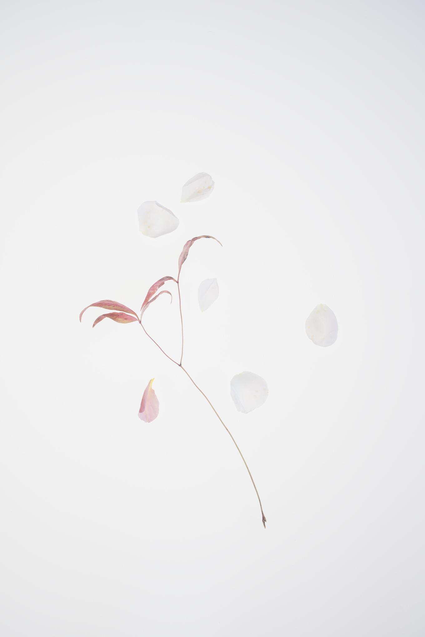 botanical foraging-073