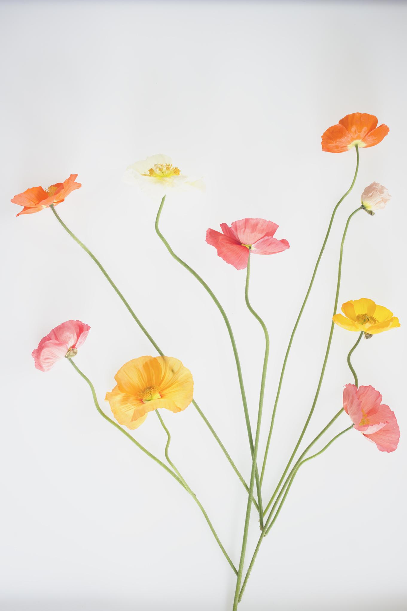Botanical_harmony_290716-155