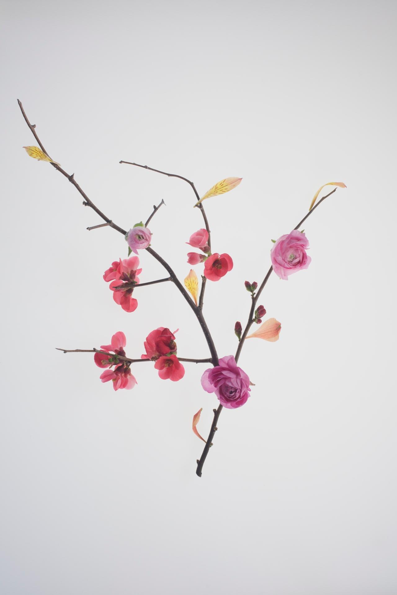 Botanical_harmony_290716-216
