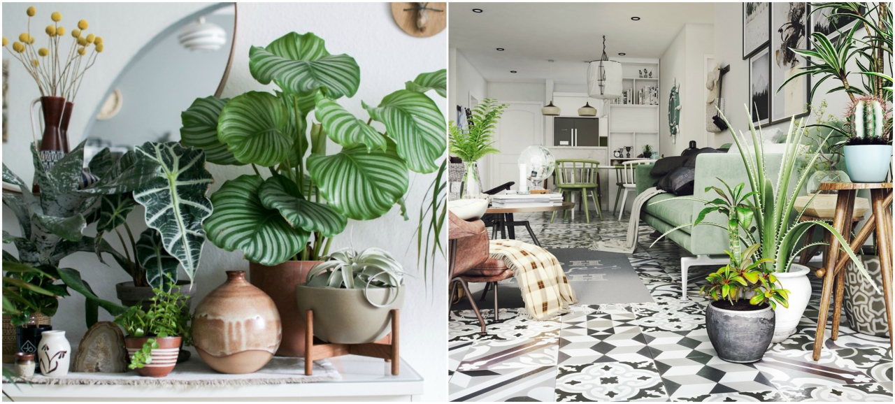 Spring Tips for Indoor House Plants | on house stars, house gifts, house rodents, house design, house candy, house nature, house home, house chemicals, house fire, house flowers, house cars, house vines, house slugs, house mites, house plans, house crafts, house ferns, house family, house people, house decorations,